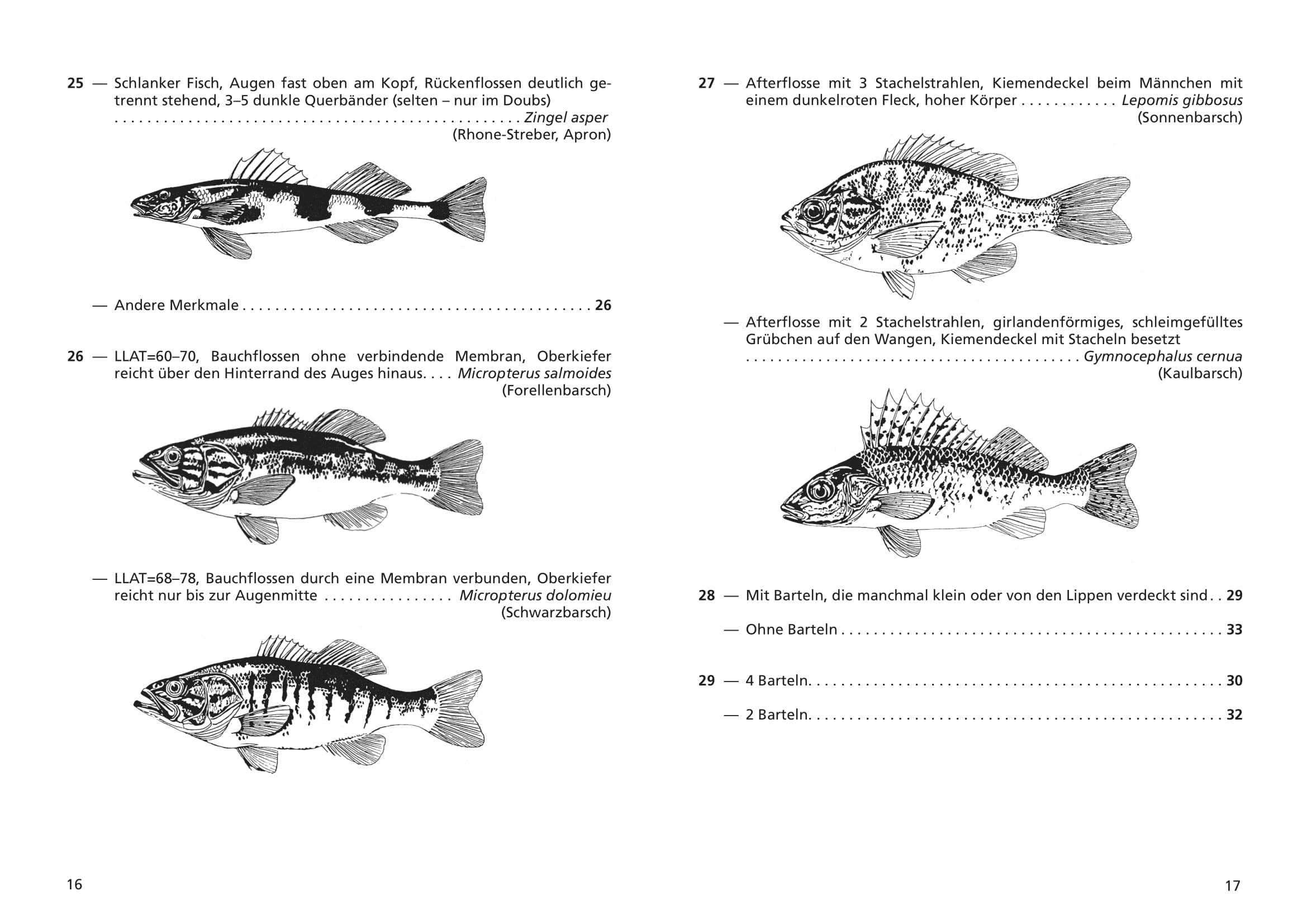 merkblatt_8_suesswasserfische-09