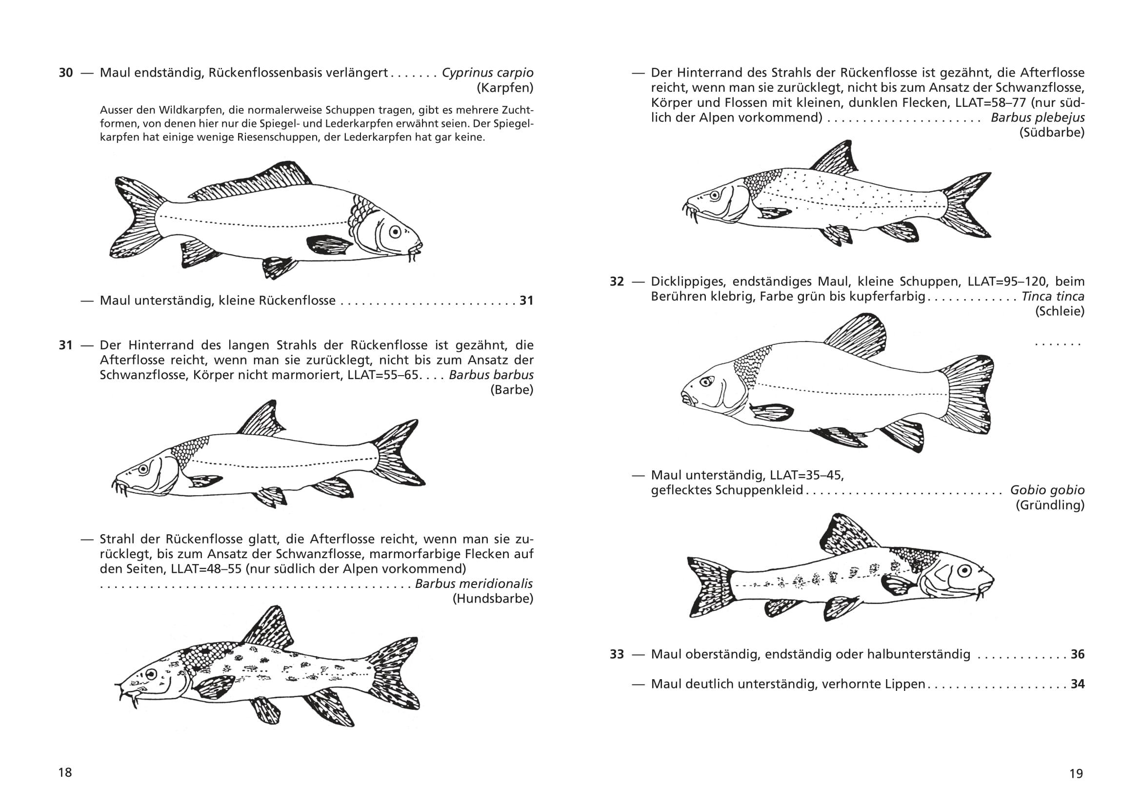 merkblatt_8_suesswasserfische-10