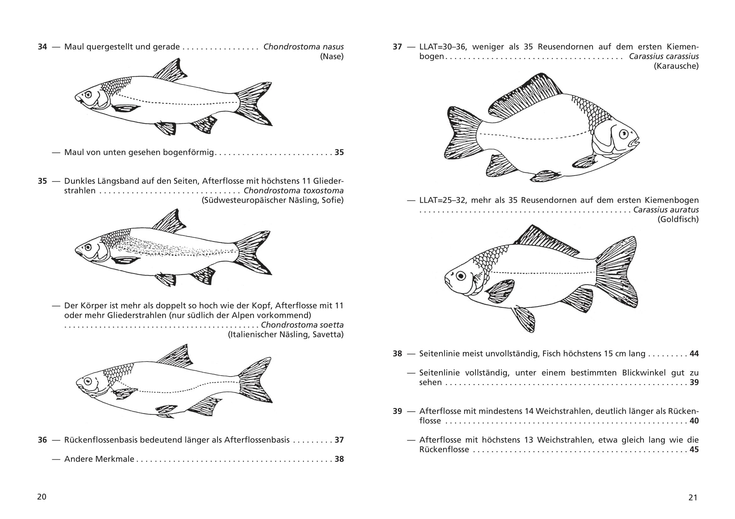 merkblatt_8_suesswasserfische-11